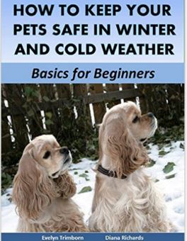 How to Keep Your Pets Safe in Winter and Cold Weather