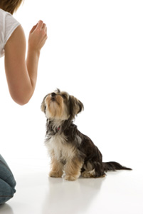 Free dog training ecourse to help your whole family